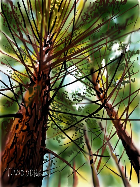 iPad Sketches Drawings Art Architect Thomas Woodman Redwood Trees Muir Woods California